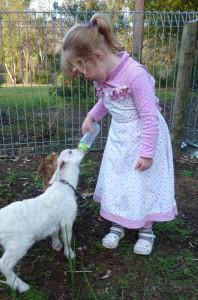feed a lamb